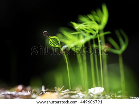 young spruce seedlings in the forest - stock photo