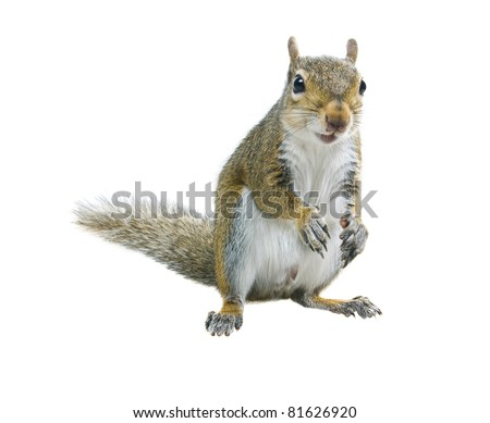 Young squirrel  seeds  on a white background - stock photo