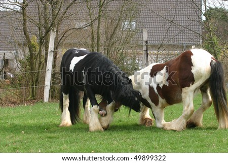 young stallions play fight games - stock photo
