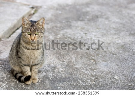 Young tabby brown cat sitting in the yard. Selective focus and copy space. - stock photo