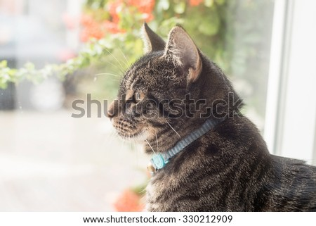 Young tabby cat looking out window. - stock photo