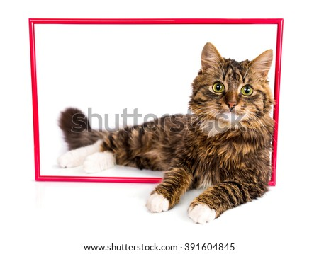 Young tabby cat lying in a red frame on a white background - stock photo