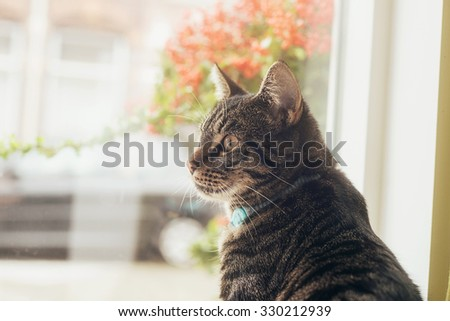 Young tabby cat sitting in front of window looking aside. - stock photo