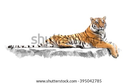 Young  tiger in the act of relax on stone and sunset background - stock photo