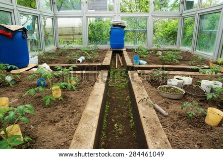 Young Tomato plants in the greenhouse growing in the summer garden - stock photo