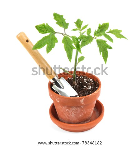 Young tomato seedling in a clay pot with a garden trowel. - stock photo