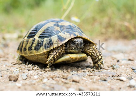Young tortoise in the wilderness