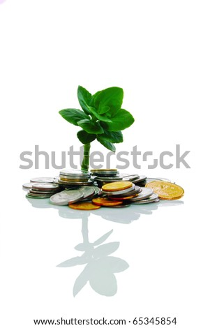 Young tree growing from pile of coins - stock photo
