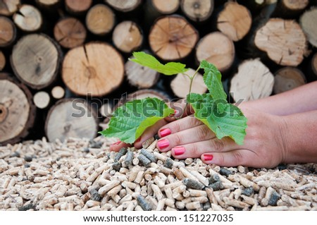 Young tree growing out of heap of biomass in hands- stock photo - stock photo