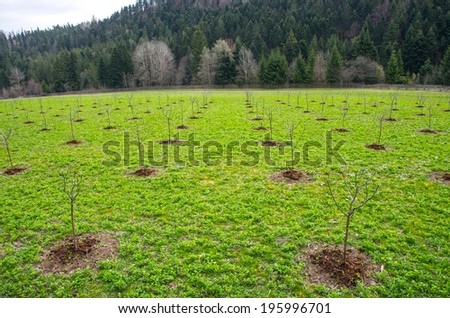 Young tree in a new apple orchard - stock photo