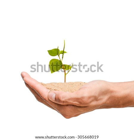 young tree in hand holding , white isolated background