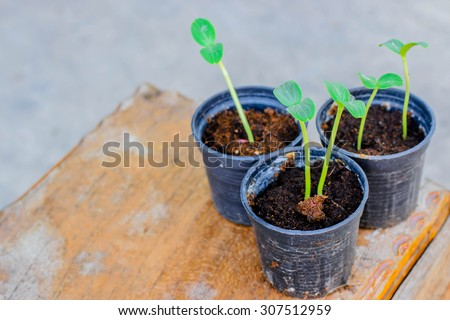Young tree in pot on table, selective focus point. - stock photo