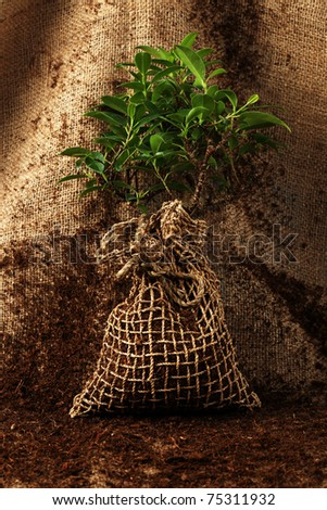 Young tree ready to be planted - stock photo