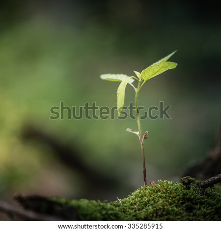 Young tree sapling sprouting from a decayed tree. - stock photo