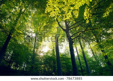 Young trees in the forest. - stock photo
