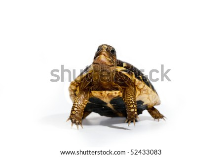 Young turtle - stock photo
