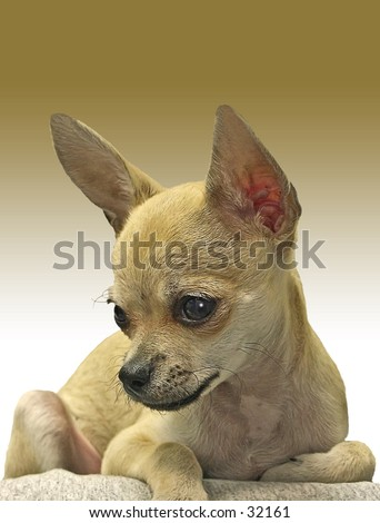 Young Tyson - stock photo