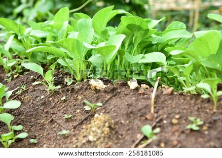 Young vegetables are growing. - stock photo