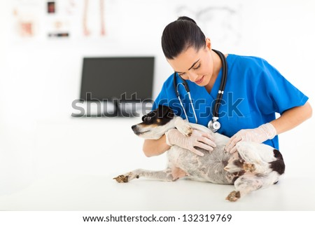 young vet doctor checking pet dog skin in animal hospital - stock photo