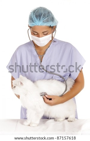 young veterinary woman examining white angora cat with stethoscope - stock photo