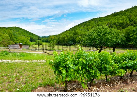 Young Vineyard in Southern France