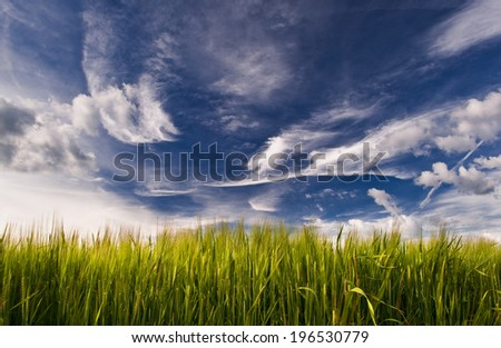 Young wheat field with dramatic sky in the background. - stock photo