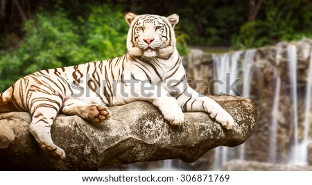 Young white siberian tiger in the act of relax on stone at waterfall background - stock photo