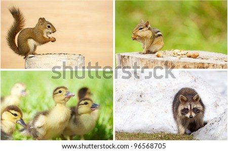 Young wild animals collage. - stock photo