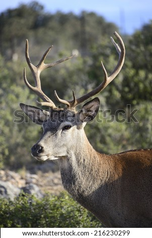 Young wild deer portrait - stock photo