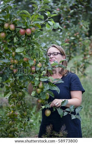 Young woman choosing and picking apples from a tree - stock photo