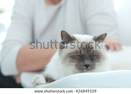 Young woman cuddling her lovely cat sleeping on a chair at home - stock photo