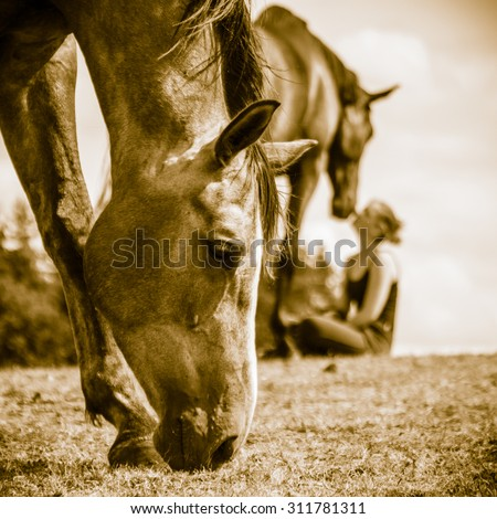 Young woman girl taking care of brown horse. Female with animal outdoor. - stock photo