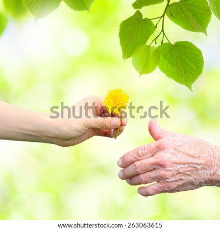 Young woman giving a dandelion to senior woman with green tree leaves - stock photo