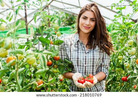 Young Woman hands with gloves holding red tomatoes, working in a greenhouse. - stock photo