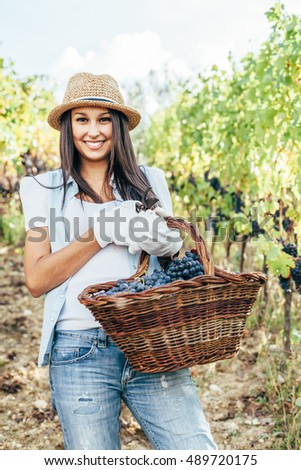 Young woman harvesting grapes in a vineyard