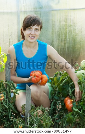 Young woman harvesting tomato in greenhouse - stock photo