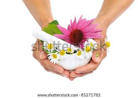 Young  woman holding mortar with herbs - Echinacea, ginkgo, chamomile - stock photo