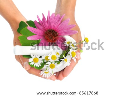 Young  woman holding mortar with herbs  Echinacea, ginkgo, chamomile - stock photo