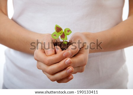 young woman holding plant, coleus sprout. Isolated on white background - stock photo