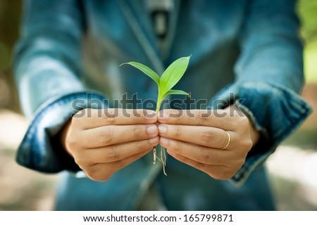 Young woman holding young plant in her hands - stock photo
