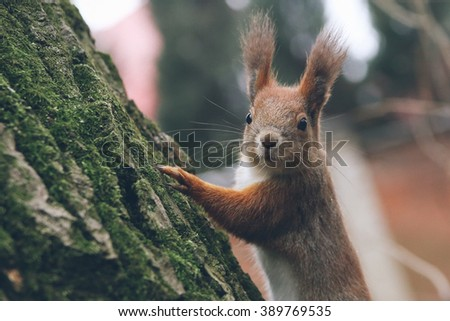 Young woman is feeding squirrel in autumn forest.  - stock photo