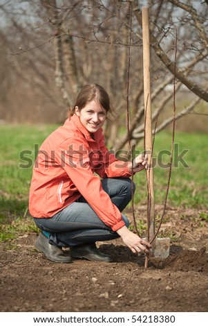 young woman making orchard with spade and sprouts  in spring
