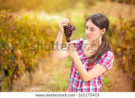 Young woman peasant who looks the grapes in the vineyard  - stock photo