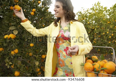 Young woman picking an orange from a tree while holding a supermarket shopping basket full of oranges. - stock photo