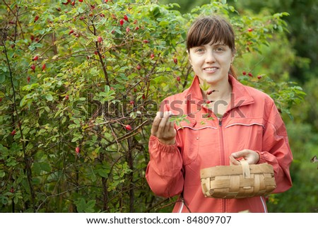 Young woman picking brier in the plant - stock photo