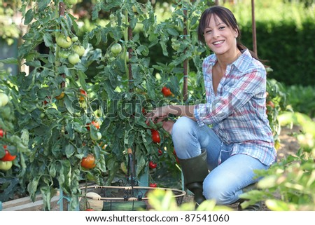 Young woman picking tomatoes - stock photo