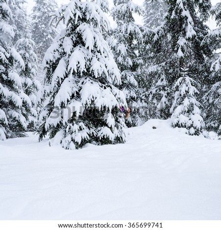 Young woman playing hide and seek for the tree in the winter forest. Smiling girl in pink ski suit  looks out from behind a tree. - stock photo