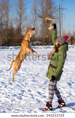 Young woman playing with dog breed American Pit Bull Terrier in winter - stock photo