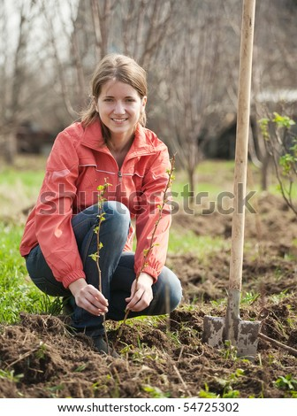 young woman resetting  raspberry sprouts in orchard