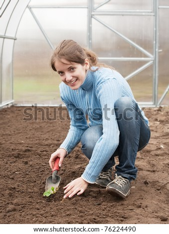 young woman resetting  strawberry sprouts in bed at hothouse - stock photo